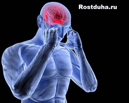 centralinaya-nervnaya-sistema